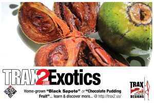 More Trax2 Exotics - Chocolate pudding fruit