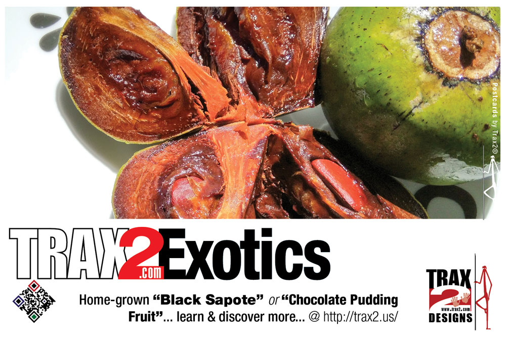 Chocolate Pudding Fruit - ‎Black Sapote