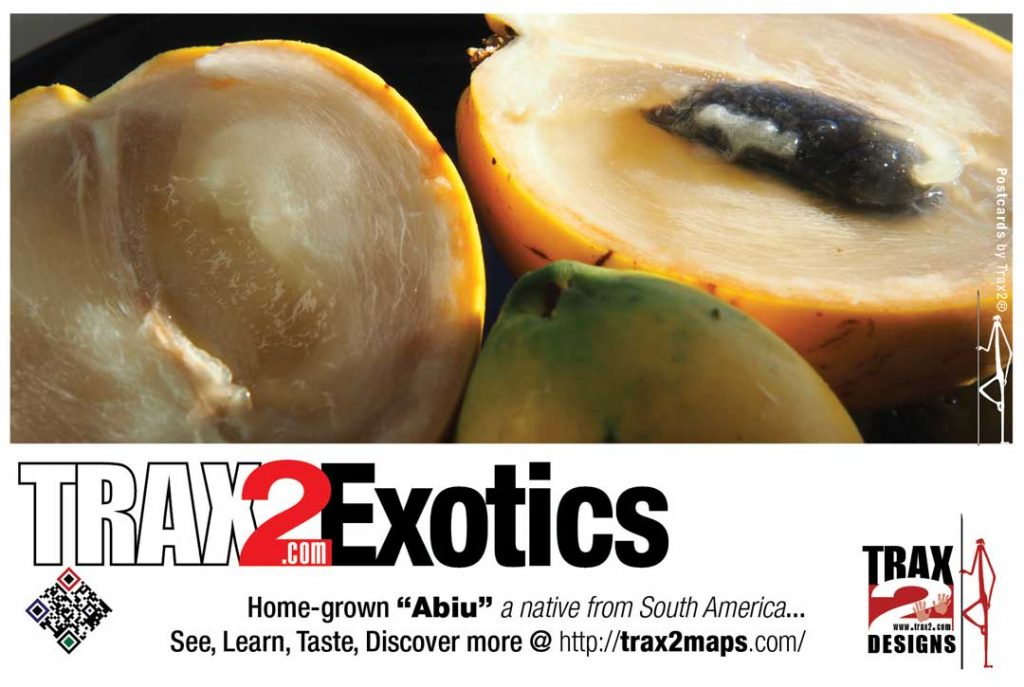 abiu fruit