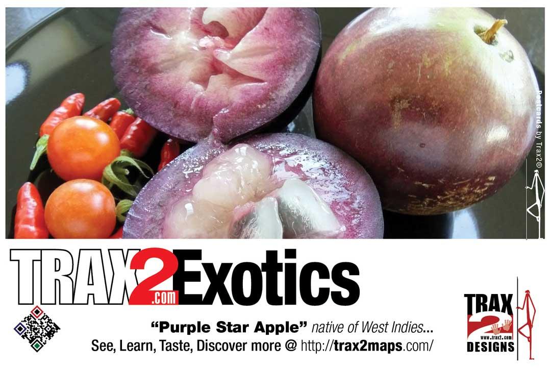 Purple star apple