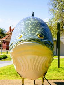 Big Murray Cod Tocumwal
